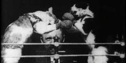 Jelenet Edison 1894-es mozgófilmjéből
