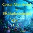 Caesar Állateledel és Kisállatkereskedés - Garay Center