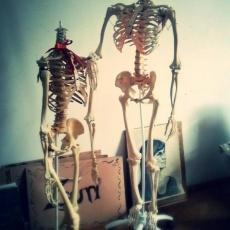 csontvázak - rajzkellék