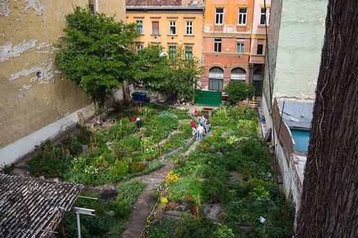 Kép: FB, Kisdiófa kert