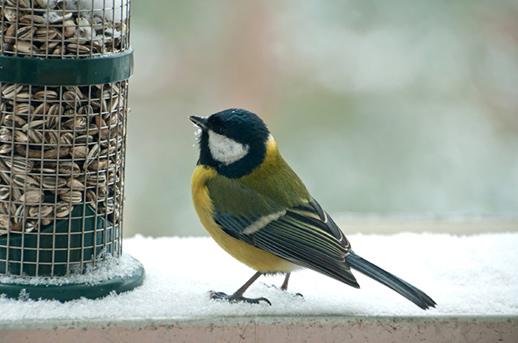 Fotó: wildbirdfeeders