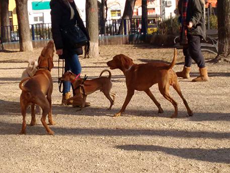 kutyák a klauzál futiban